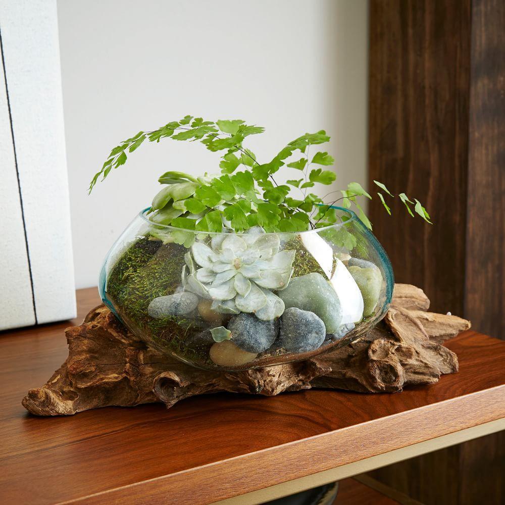 Wood Glass Terrariums West Elm Australia