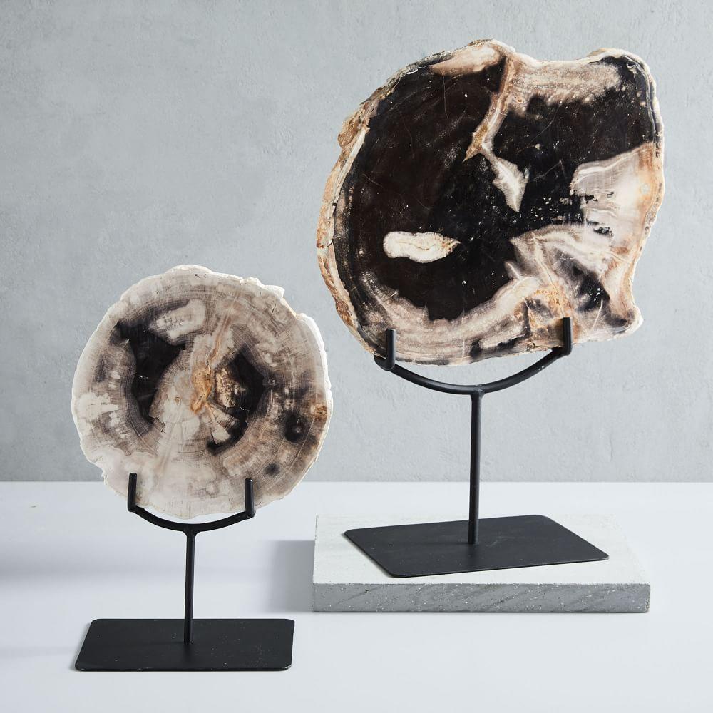 Petrified Wood Object On Stand West Elm Australia