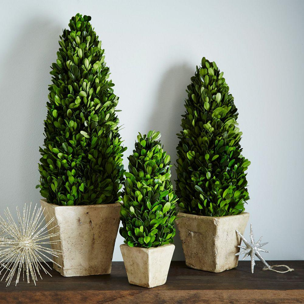 Boxwood Trees West Elm Au