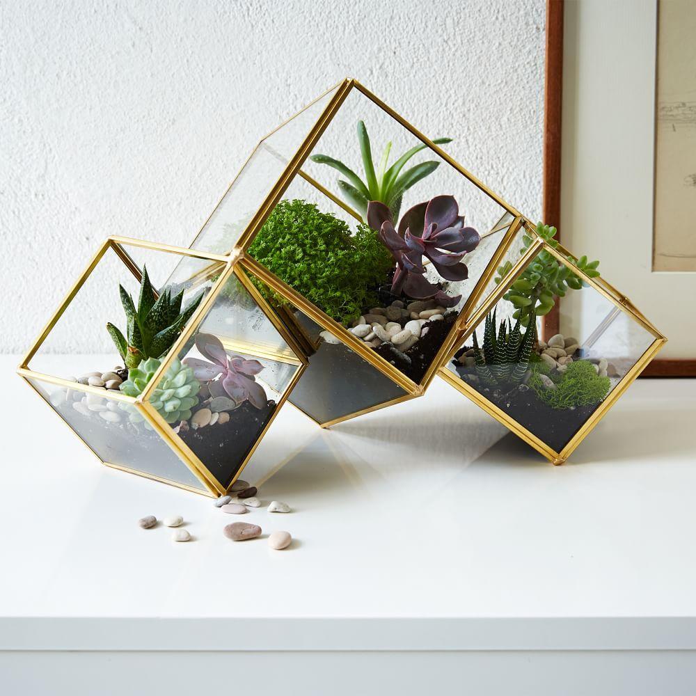 cube terrarium west elm australia. Black Bedroom Furniture Sets. Home Design Ideas