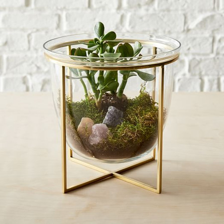 Eden Cross Base Terrarium
