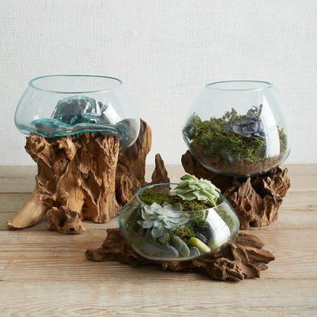 Wood + Glass Terrariums